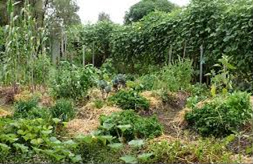 permaculture-customhomedesigns-1
