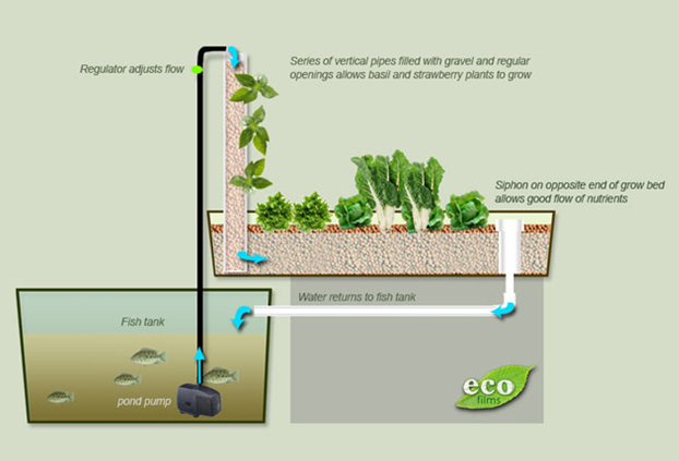 aquaponics-customhomedesigns-1