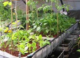 aquaponics-customhomedesigns-2